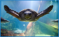 Turtle - Long Island Aquarium